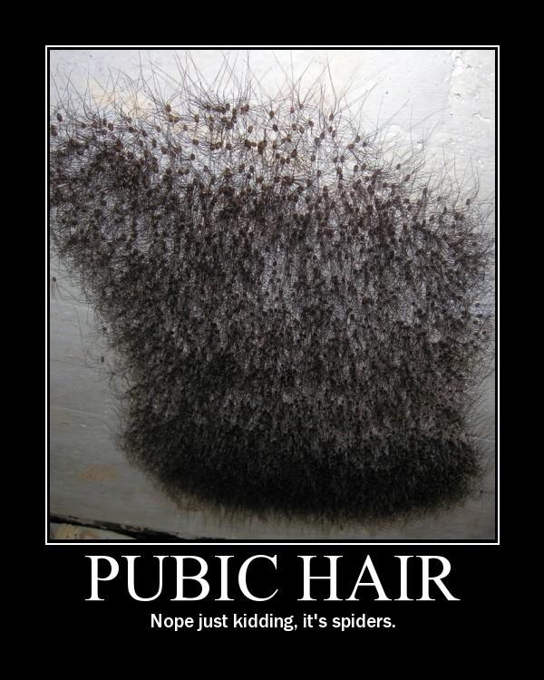 COMEDY: Pubic Hair
